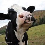 Reconsidering Veganism at Thanksliving