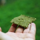 raw vegan green crackers