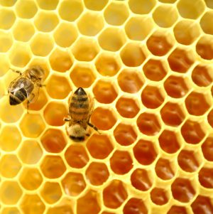 You Ask, I Answer: Why Don't You Eat Honey?
