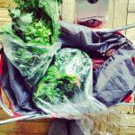 From the Farmer DC: Five Weeks of Local, Seasonal Vegan Meals