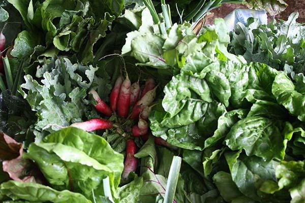 leafy-greens-for-bone-health